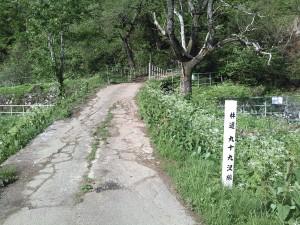 林道99沢線