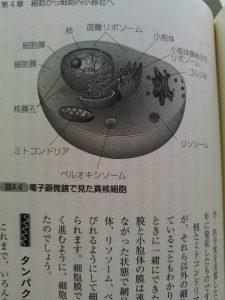 真核細胞 小胞体