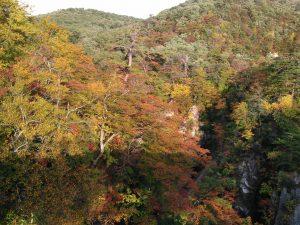 鳴子狭 岩 紅葉